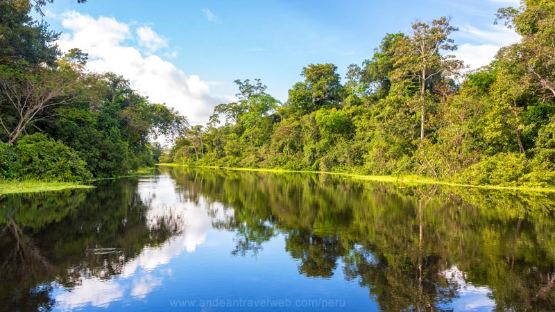 Amazon Rainforest Peru